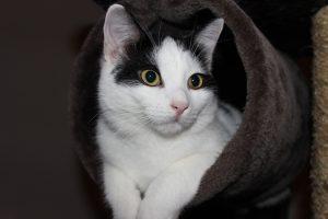 Beliebte Haustiere in Deutschland sind Katzen